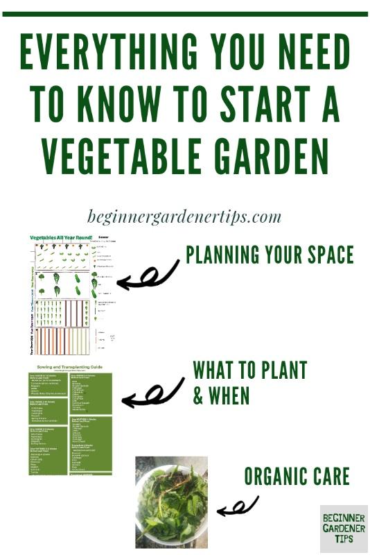 How to start a vegetable garden from scratch beginner gardening
