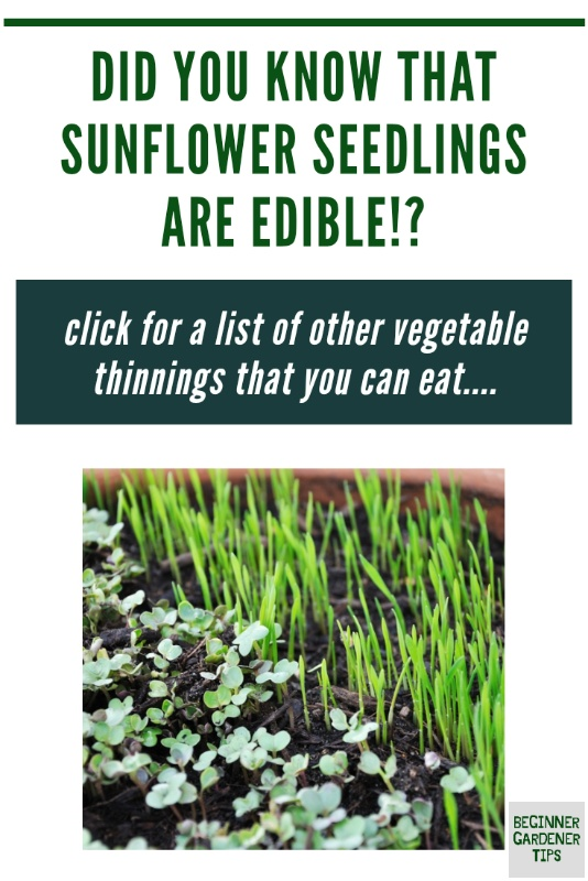 Edible thinnings seedlings you can eat gardening hacks