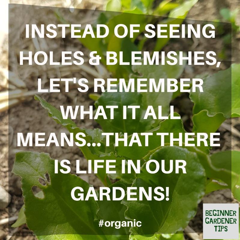 Organic gardening pests