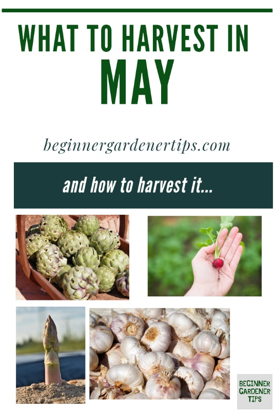 What to Harvest in May