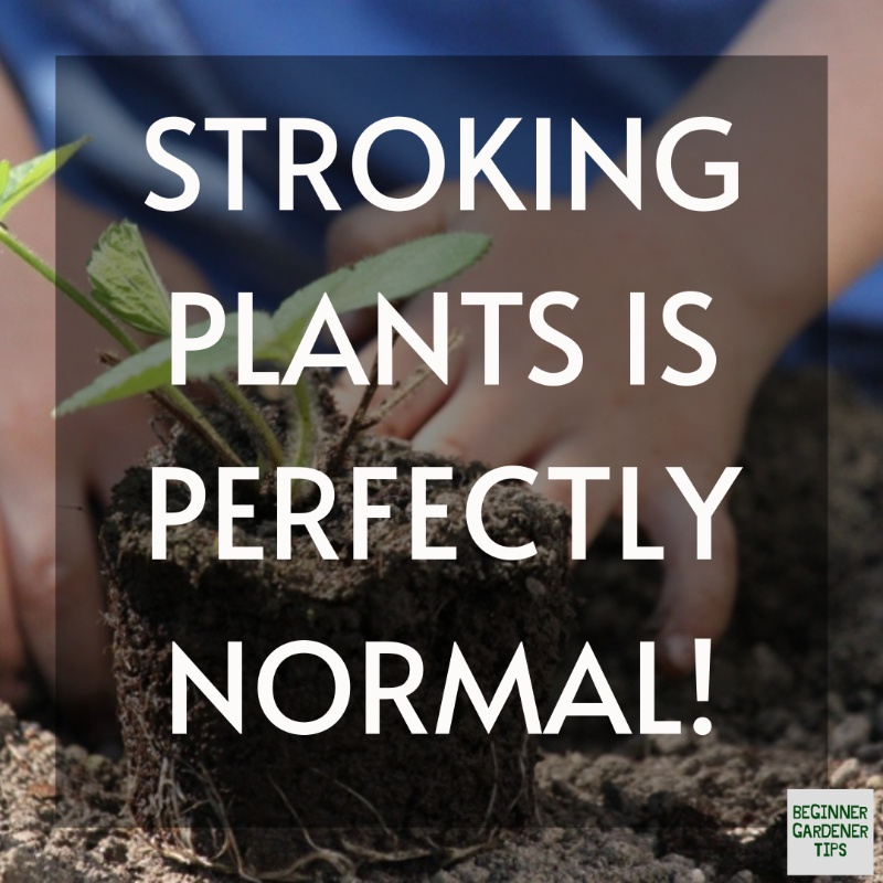 Does stroking plants make them stronger