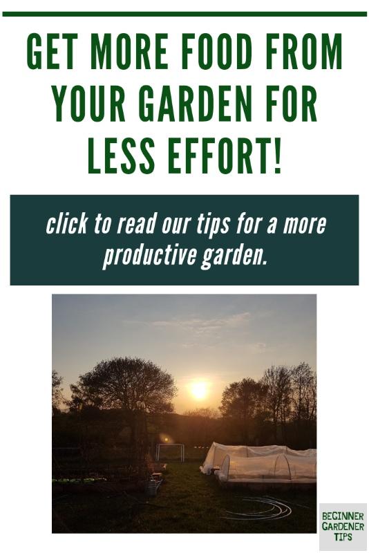 More productive garden