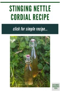 stinging nettle cordial recipe / hedgerow syrup / homemade cordial recipe / stinging nettle recipes